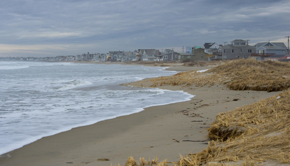 Millions of Microscopic Fly Carcasses Left Dark Stains on People's Feet at New England Beaches