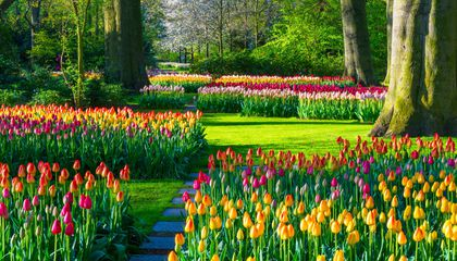 Where to See Thousands and Thousands of Tulips