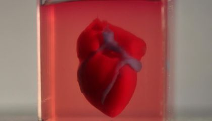 Scientists Used Human Tissue to 3-D Print a Tiny Heart