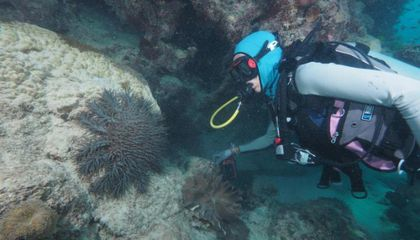 What Eats the Crown-of-Thorns Starfish? The Evidence Is in the Poop