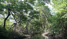 Here's How Local Communities Can Help Save Mangroves