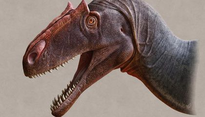 Newly Described Meat-Eating Dinosaur Dominated During the Jurassic Period