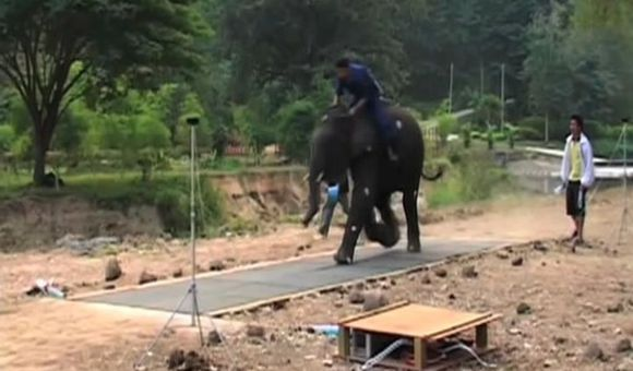 Preview thumbnail for video'How Fast Can an Elephant Run?