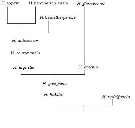 The Homo family tree