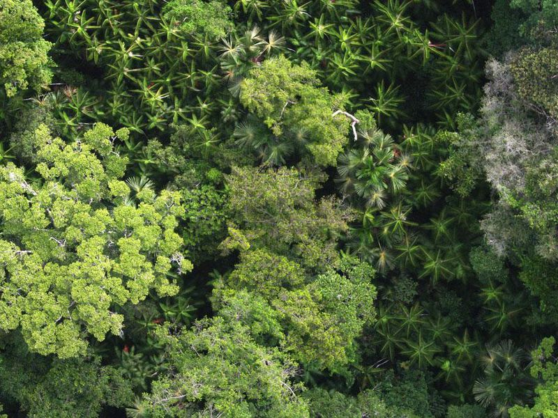the supposedly pristine untouched amazon rainforest was actually