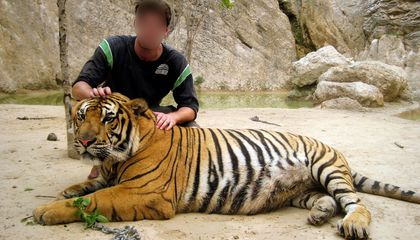 The Big Unsexy Problem With Tiger Selfies