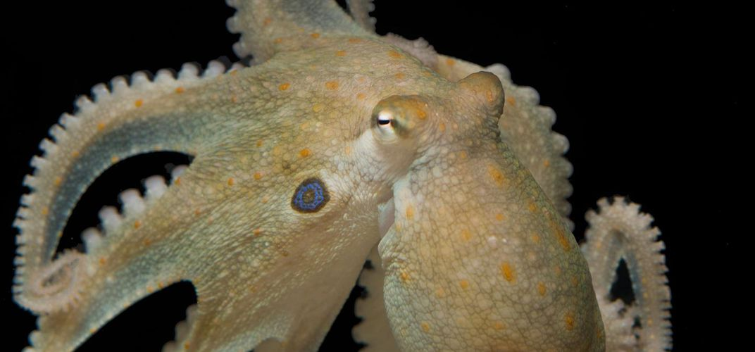 Caption: Ecstasy Turns Antisocial Octopuses Into Best Pals