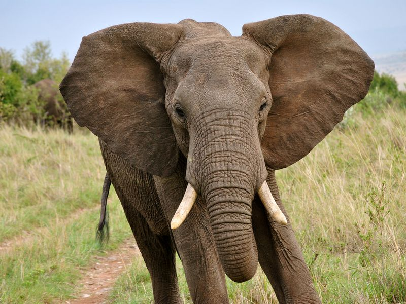 14 Fun Facts About Elephants | Science | Smithsonian