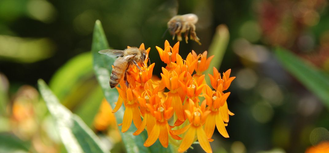 Caption: How to Protect Your Pollinators for World Bee Day
