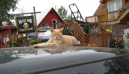 Small Alaska Town Mourns Loss of Stubbs the Cat, Beloved Honorary Mayor