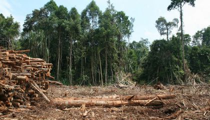 Cut Down a Forest, Let It Grow Back, And Even 30 Years Later It's Not the Same