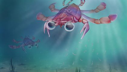 Fossil Discovery Has Scientists Questioning: What Makes a Crab a Crab?