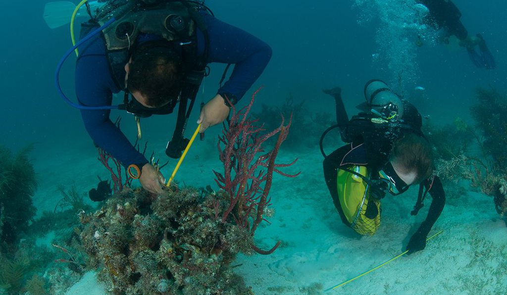 This summer, Stephen Box and Nathan Truelove will be gathering tissue samples from lobsters in five geographically distinct areas of the Caribbean to see if they can find specific bits of DNA that are expressed in predictable ways based on their location.