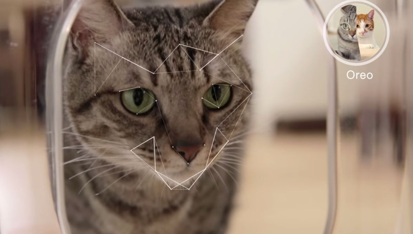 This Smart Cat Feeder Uses Facial Recognition to Exclude Greedy