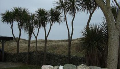 Palm Trees in Ireland?