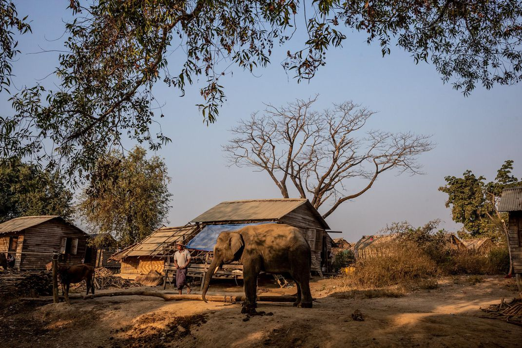 Myint Than, a mahout at the Myaing Hay Wun elephant camp in Myanmar