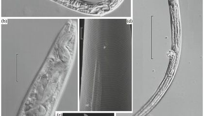 Ancient Roundworms Allegedly Resurrected From Russian Permafrost