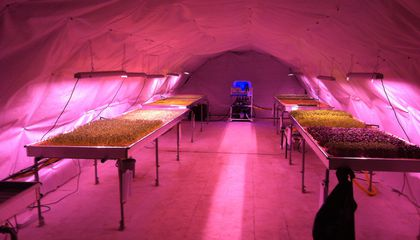 Would You Eat a Salad Grown in a Bomb Shelter?