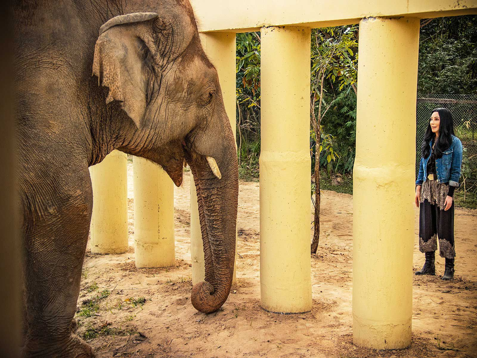 How Cher Helped Rescue the World's Loneliest Elephant