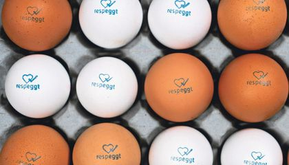 "A German Grocery Chain Is Selling First-Of-Its-Kind ""No-Kill"" Eggs"