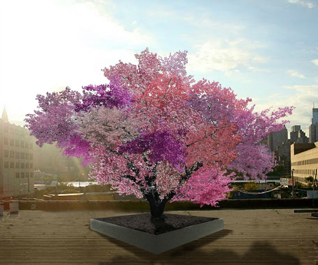 A Tree Grows 40 Different Types of Fruit | Innovation