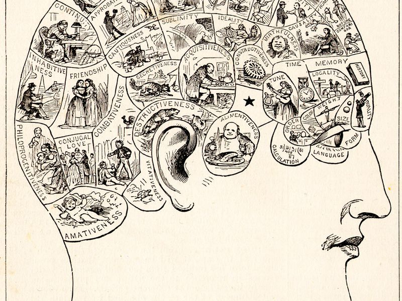 A typical 19th-century phrenology chart