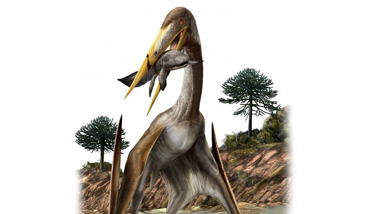 Unique Bone Structure Helped Pterosaurs Fly