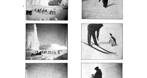 """Penguin Interviews,"" via Frederick Cook's Through the first Antarctic night, 1896-1899."