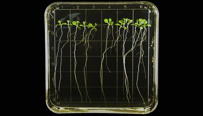 "Seeds May Use Tiny ""Brains"" to Decide When to Germinate"