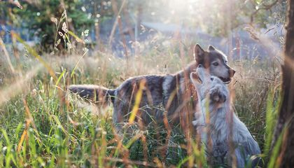 PHOTOS: A Sanctuary for Wolves