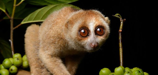 slow-loris-bill-allman-test.jpg