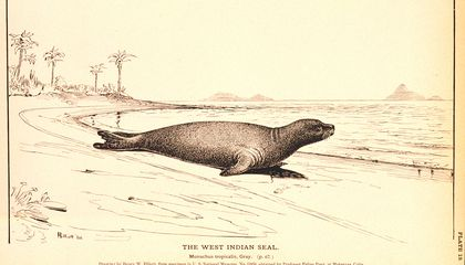 For the First Time in More Than 100 Years, Scientists Discover New Seal Genus