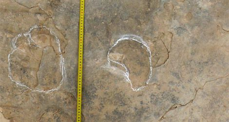Part of a sauropod trackway from the Teruel, Spain tracksite