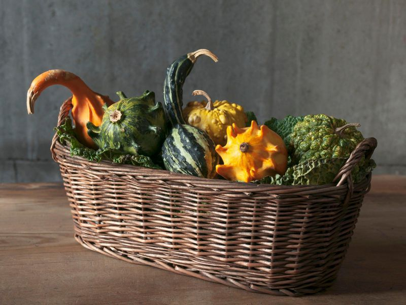 How decorative gourd season conquered fall