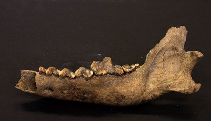 Humans May Have Domesticated Dogs Tens of Thousands of Years Earlier Than Thought