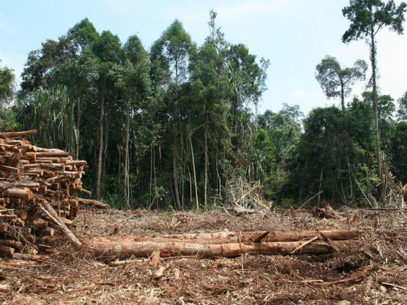 asian forest being cut down jpg 1500x1000