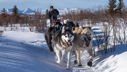 Nostalgic for the North? Take a Virtual Dogsled Ride in Fairbanks, Alaska