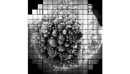 Scientists Tested Out the World's Largest Digital Camera on a Piece of Broccoli
