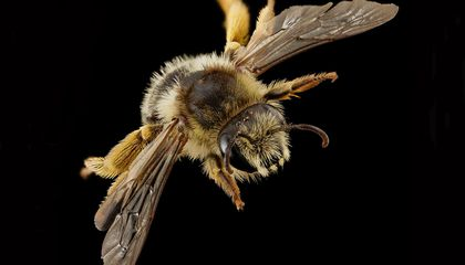 Bees and Wasps in Britain Have Been Disappearing For More Than a Century