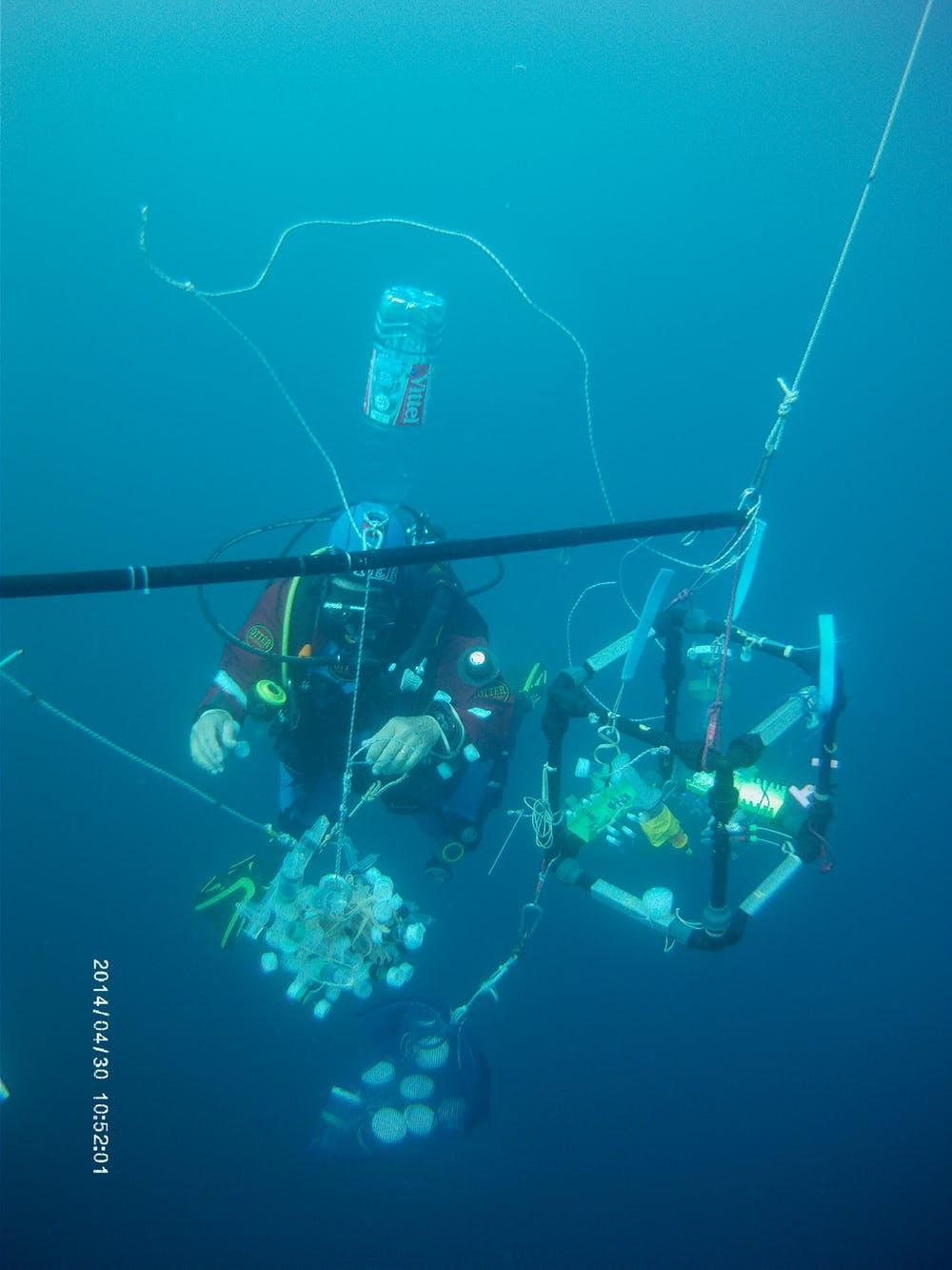 The 'salpatron' allows researchers to conduct feeding studies underwater.