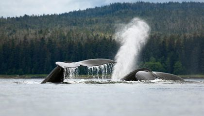 These Drones Hunt Whale Snot