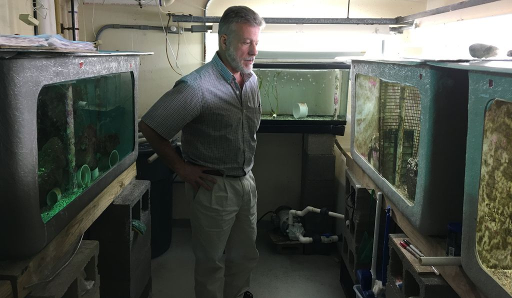 Alex Vagelli takes checks over the cardinalfish he keeps in his lab.