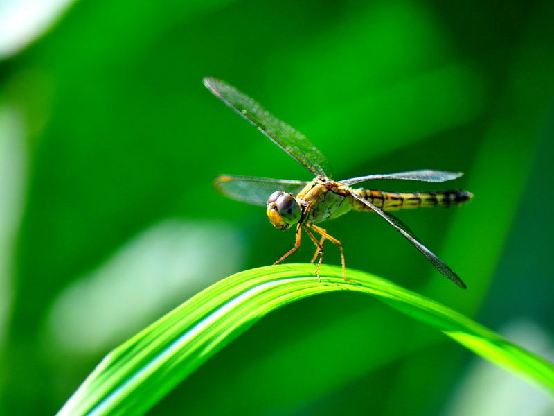 14 Fun Facts About Dragonflies | Science | Smithsonian