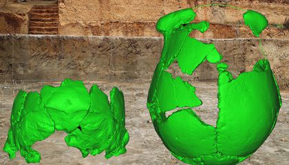 Scientists Think These Skulls May Be New Human Ancestor