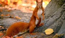 Are Viking Squirrels to Blame for Infecting England with Leprosy?