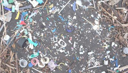 Remote South Atlantic Islands Are Flooded With Plastic