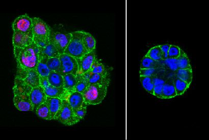 Fluorescence images