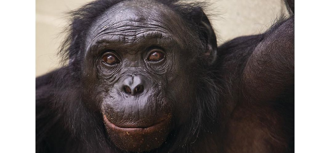 Caption: What Bonobos Have to Say About Language