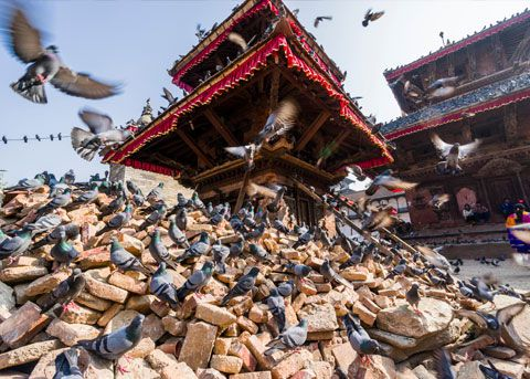 Nepal Earthquake image