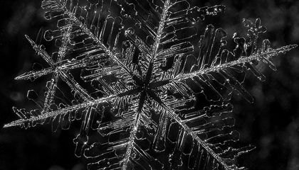 Snowflakes May Have Different Designs, But They Always Have Six Sides
